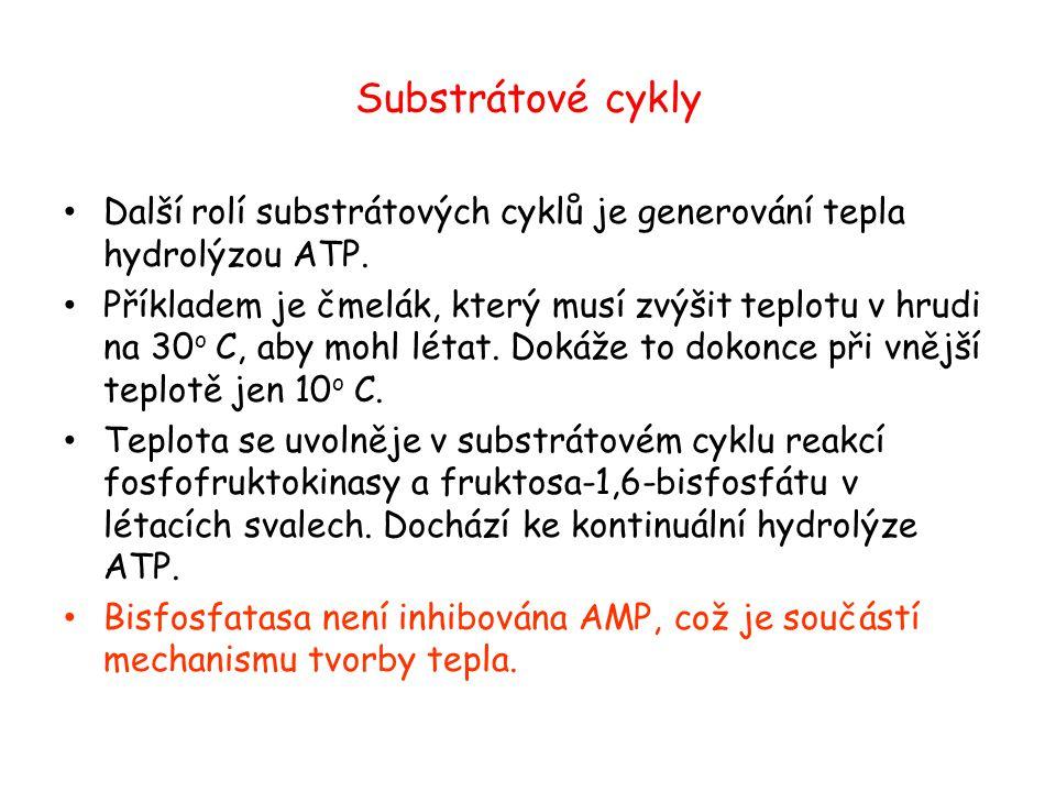 Substrátové cykly Další rolí substrátových cyklů je generování tepla hydrolýzou ATP. Příkladem je čmelák, který musí zvýšit teplotu v hrudi na 30 o C,
