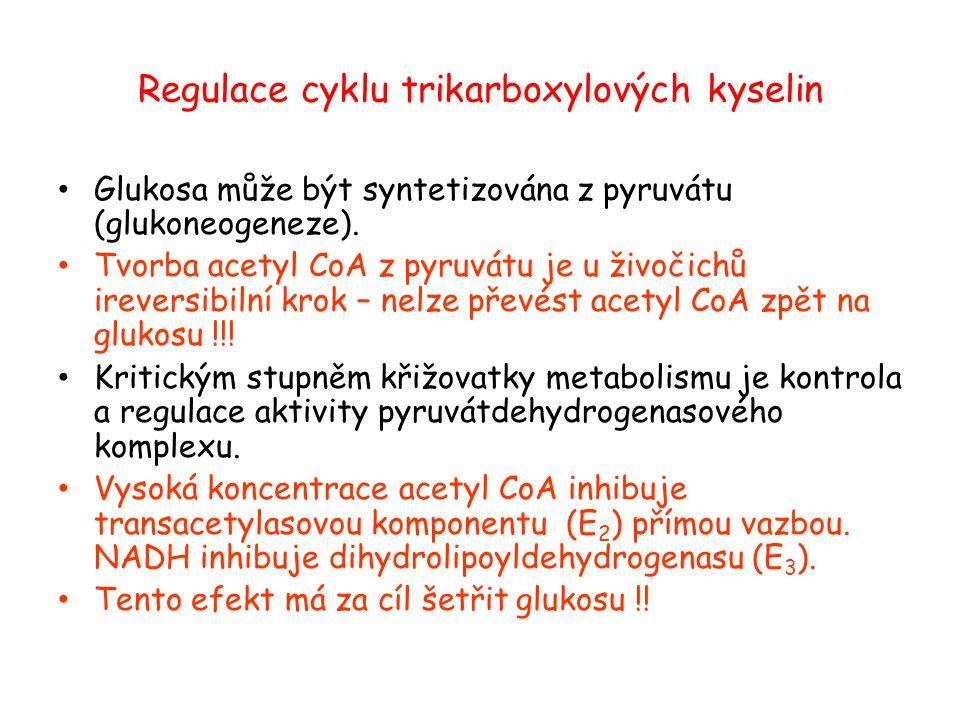 Regulace cyklu trikarboxylových kyselin Glukosa může být syntetizována z pyruvátu (glukoneogeneze). Tvorba acetyl CoA z pyruvátu je u živočichů irever