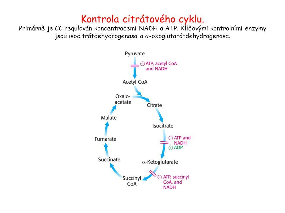 Kontrola citrátového cyklu. Primárně je CC regulován koncentracemi NADH a ATP. Klíčovými kontrolními enzymy jsou isocitrátdehydrogenasa a  -oxoglutar