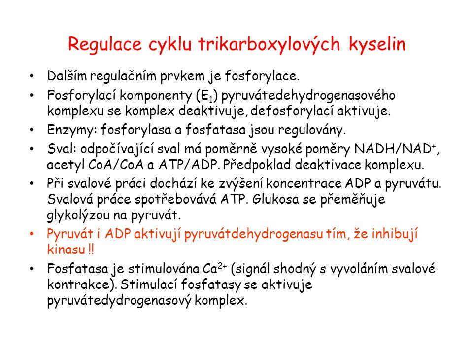 Regulace cyklu trikarboxylových kyselin Dalším regulačním prvkem je fosforylace. Fosforylací komponenty (E 1 ) pyruvátedehydrogenasového komplexu se k