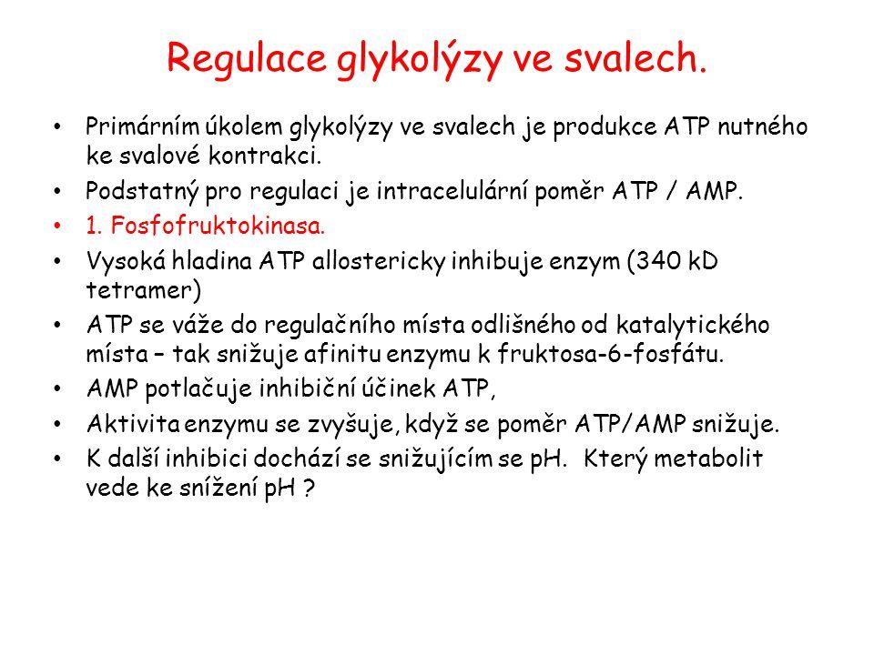 Regulace glykolýzy ve svalech. Primárním úkolem glykolýzy ve svalech je produkce ATP nutného ke svalové kontrakci. Podstatný pro regulaci je intracelu