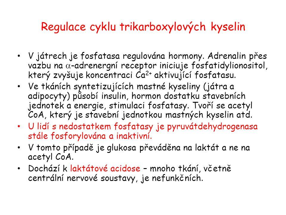 Regulace cyklu trikarboxylových kyselin V játrech je fosfatasa regulována hormony. Adrenalin přes vazbu na  -adrenergní receptor iniciuje fosfatidyli