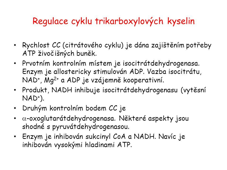 Regulace cyklu trikarboxylových kyselin Rychlost CC (citrátového cyklu) je dána zajištěním potřeby ATP živočišných buněk. Prvotním kontrolním místem j
