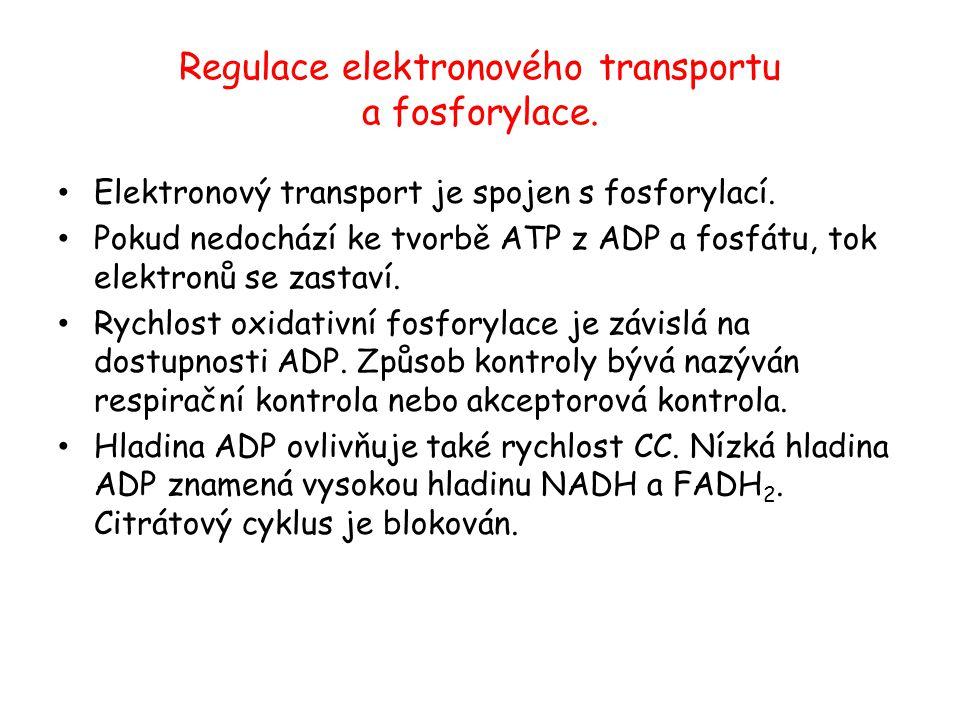 Regulace elektronového transportu a fosforylace. Elektronový transport je spojen s fosforylací. Pokud nedochází ke tvorbě ATP z ADP a fosfátu, tok ele