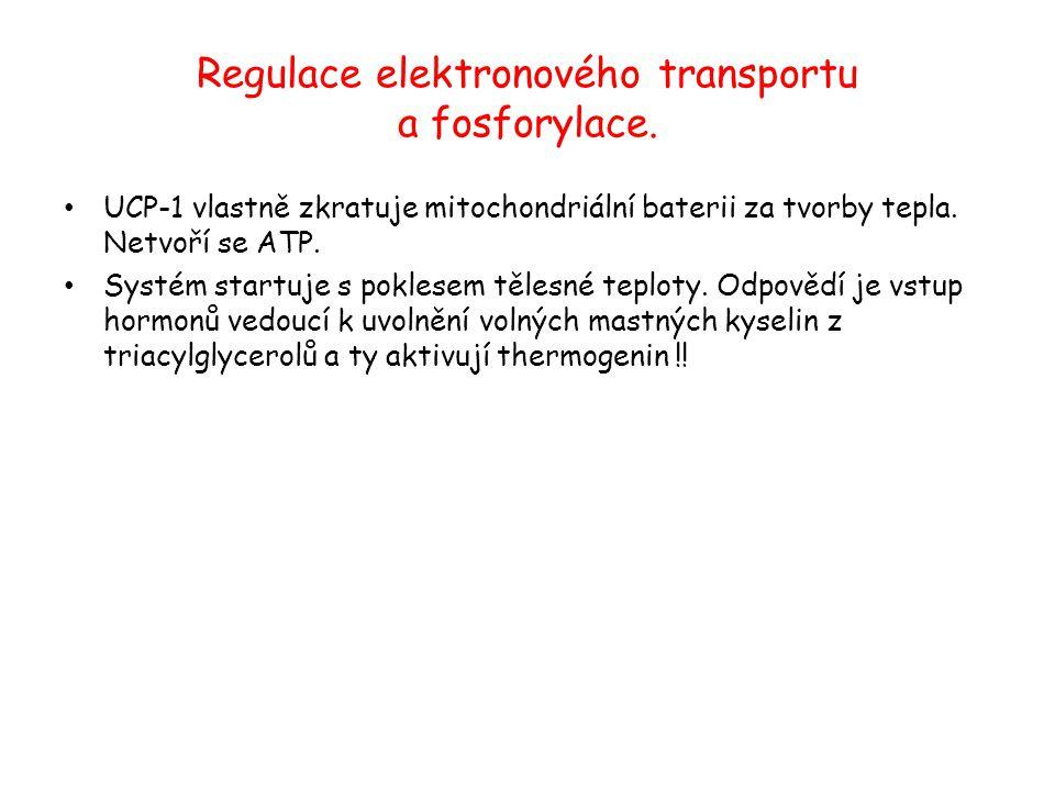 Regulace elektronového transportu a fosforylace. UCP-1 vlastně zkratuje mitochondriální baterii za tvorby tepla. Netvoří se ATP. Systém startuje s pok