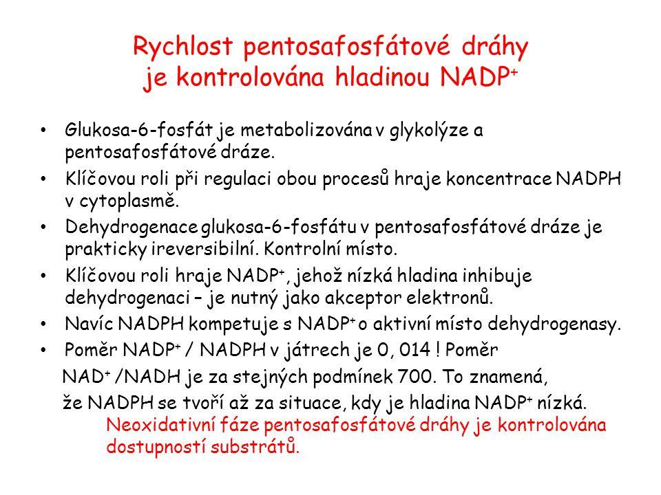 Rychlost pentosafosfátové dráhy je kontrolována hladinou NADP + Glukosa-6-fosfát je metabolizována v glykolýze a pentosafosfátové dráze. Klíčovou roli