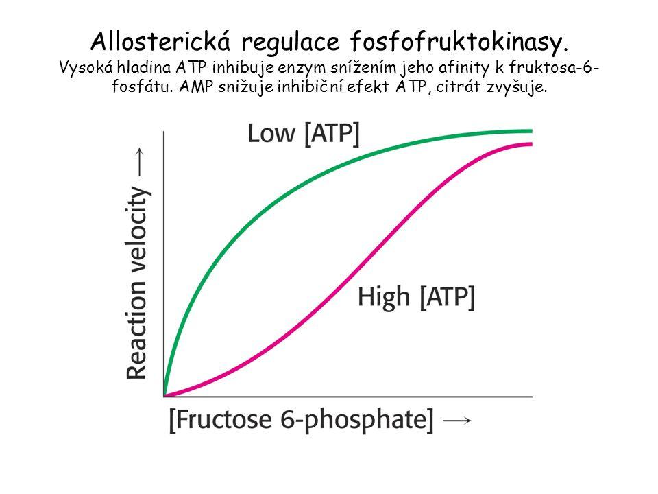 Allosterická regulace fosfofruktokinasy. Vysoká hladina ATP inhibuje enzym snížením jeho afinity k fruktosa-6- fosfátu. AMP snižuje inhibiční efekt AT