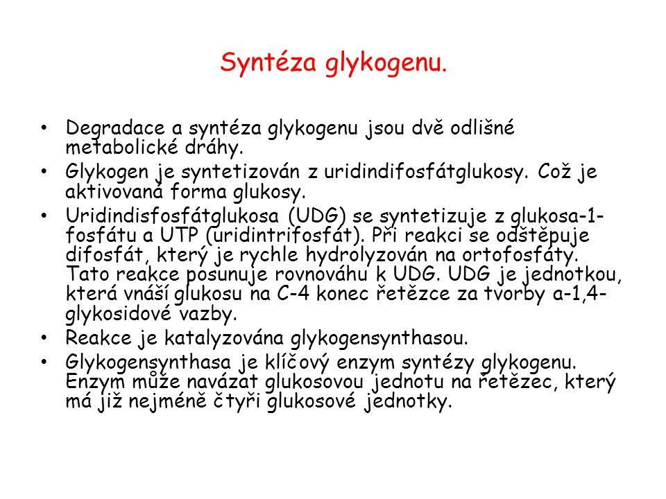 Syntéza glykogenu. Degradace a syntéza glykogenu jsou dvě odlišné metabolické dráhy. Glykogen je syntetizován z uridindifosfátglukosy. Což je aktivova