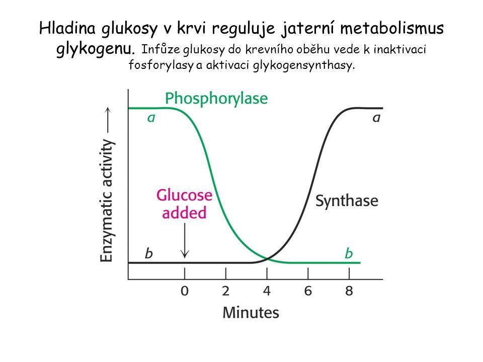 Hladina glukosy v krvi reguluje jaterní metabolismus glykogenu. Infůze glukosy do krevního oběhu vede k inaktivaci fosforylasy a aktivaci glykogensynt
