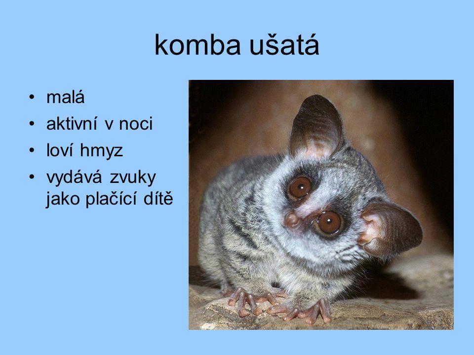 opice nejpočetnější skupina primátů aktivní ve dne větší zbrázděný mozek oči směřují dopředu jeden pár mléčných bradavek na hrudníku zkrácený čenich (horší čich) nehty mimické svaly nejvíce druhů žije v Africe a v jižní Asii 3 skupiny