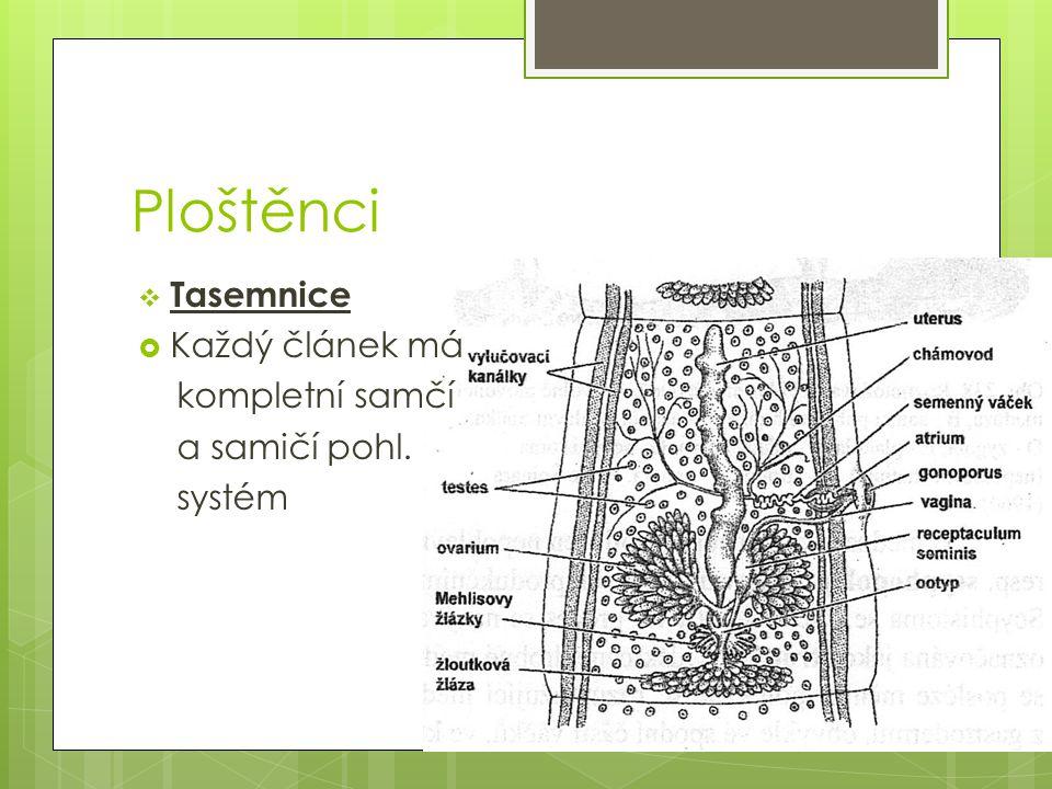 Ploštěnci  Tasemnice  Každý článek má kompletní samčí a samičí pohl. systém