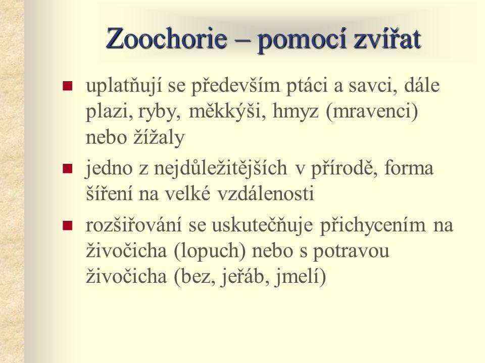Zoochorie – pomocí zvířat uplatňují se především ptáci a savci, dále plazi, ryby, měkkýši, hmyz (mravenci) nebo žížaly jedno z nejdůležitějších v přír