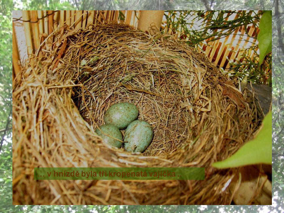 22.5. odlétla na chvilku rychle si nasbírat pár žížal a … … v hnízdě byla tři kropenatá vajíčka..