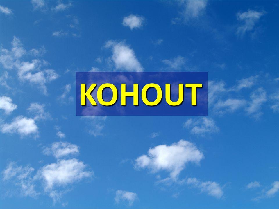 KOHOUT