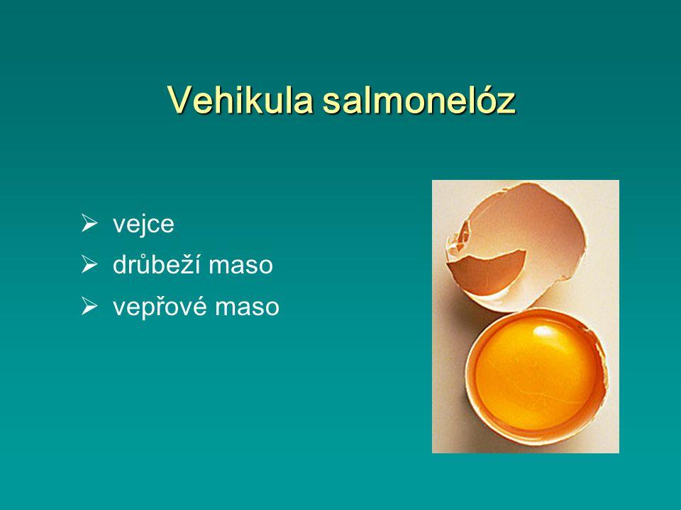 Vehikula salmonelóz  vejce  drůbeží maso  vepřové maso