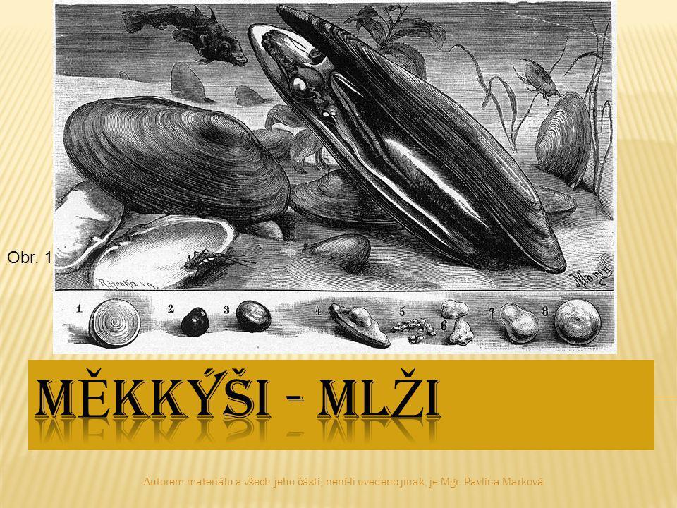 Ústřice jedláZéva obrovská hřebenatka Obr.13 Obr.