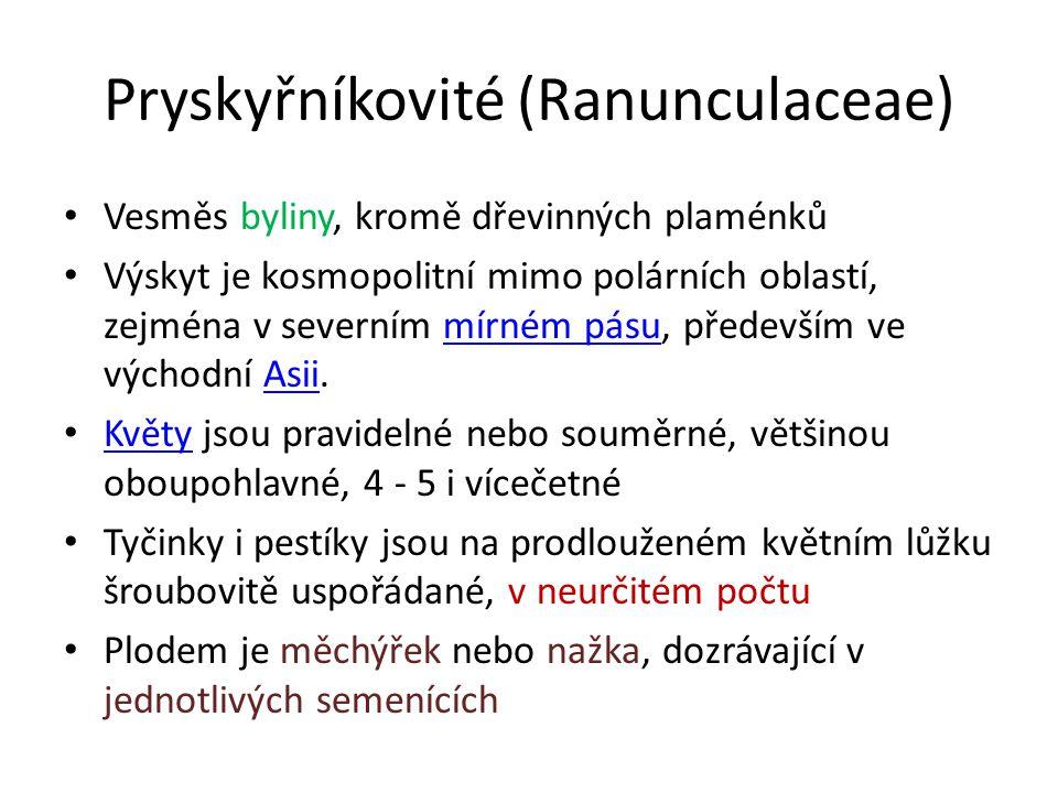 Pryskyřníkovité (Ranunculaceae) Vesměs byliny, kromě dřevinných plaménků Výskyt je kosmopolitní mimo polárních oblastí, zejména v severním mírném pásu, především ve východní Asii.mírném pásuAsii Květy jsou pravidelné nebo souměrné, většinou oboupohlavné, 4 - 5 i vícečetné Květy Tyčinky i pestíky jsou na prodlouženém květním lůžku šroubovitě uspořádané, v neurčitém počtu Plodem je měchýřek nebo nažka, dozrávající v jednotlivých semenících