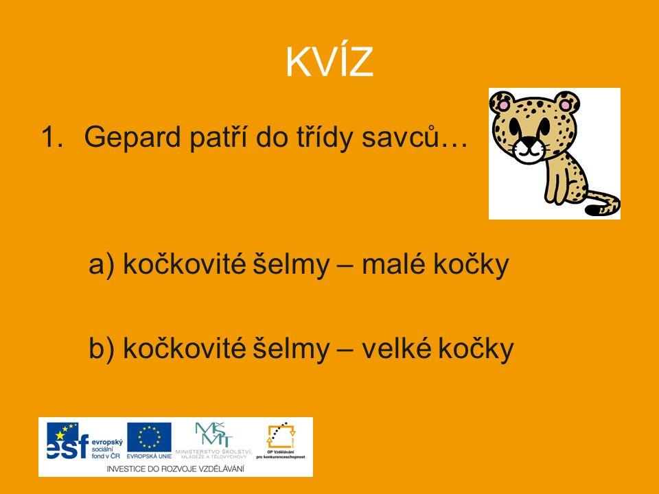 KVÍZ 1.Gepard patří do třídy savců… a) kočkovité šelmy – malé kočky b) kočkovité šelmy – velké kočky