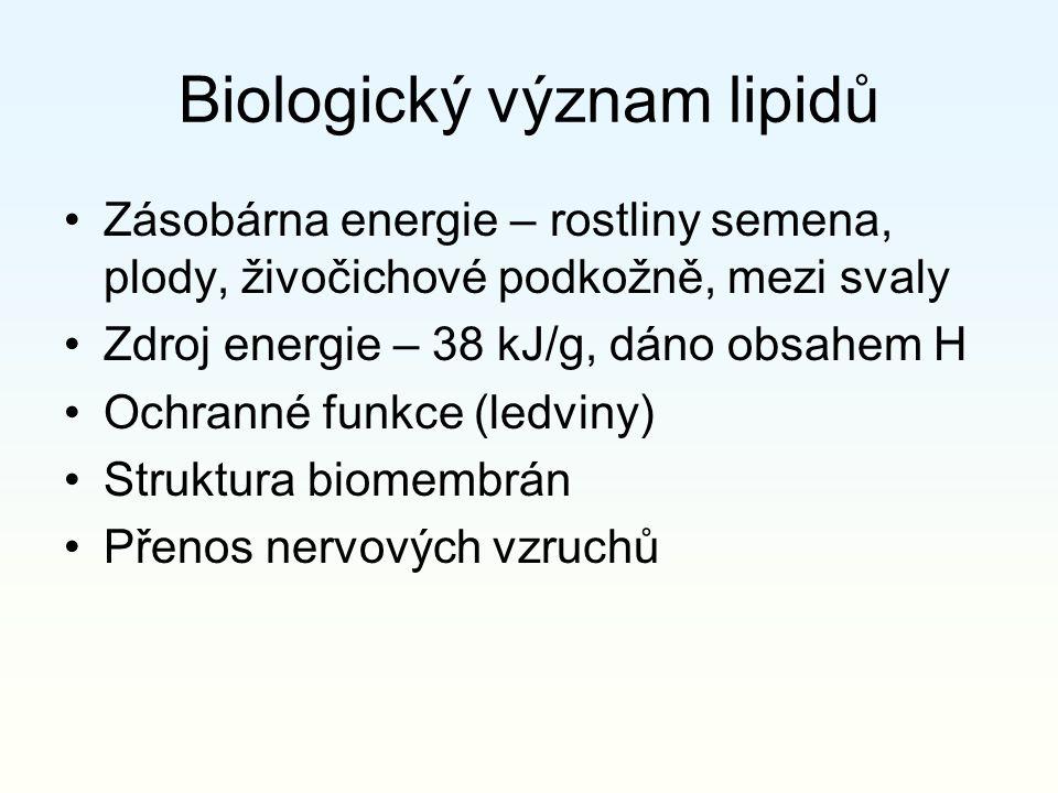 Biologický význam lipidů Zásobárna energie – rostliny semena, plody, živočichové podkožně, mezi svaly Zdroj energie – 38 kJ/g, dáno obsahem H Ochranné