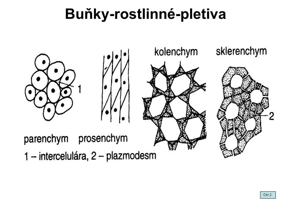 Chemické složení dřeva - buněčné dutiny III Minerální látky - látky rozpustné ve vodě.