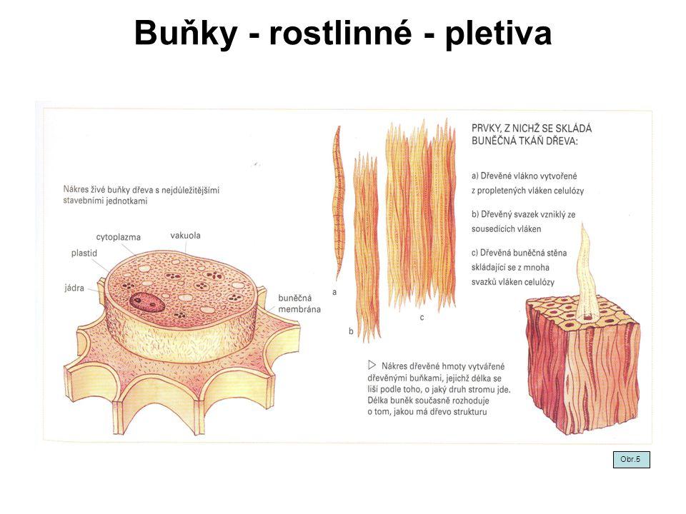 Chemické složení dřeva - buněčné stěny II Lignin - cca 20-30%.