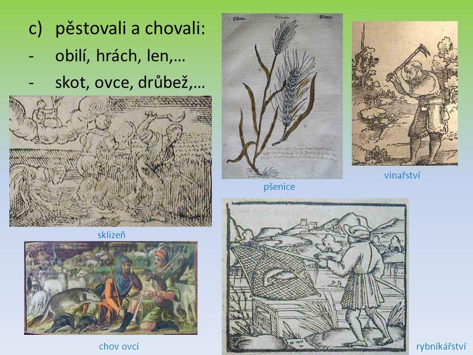 c)pěstovali a chovali: -o-obilí, hrách, len,… -s-skot, ovce, drůbež,… pšenice sklizeň chov ovcírybníkářství vinařství