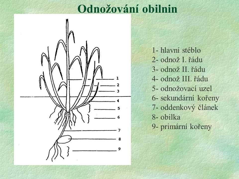 1- hlavní stéblo 2- odnož I. řádu 3- odnož II. řádu 4- odnož III. řádu 5- odnožovací uzel 6- sekundární kořeny 7- oddenkový článek 8- obilka 9- primár