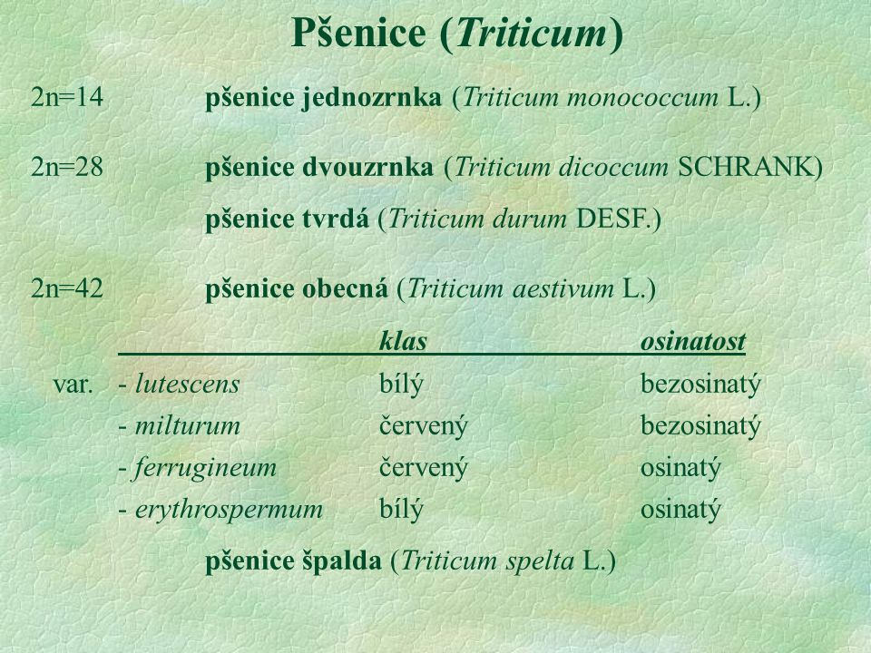 Pšenice (Triticum) 2n=14pšenice jednozrnka (Triticum monococcum L.) 2n=28pšenice dvouzrnka (Triticum dicoccum SCHRANK) pšenice tvrdá (Triticum durum DESF.) 2n=42 pšenice obecná (Triticum aestivum L.) klasosinatost var.- lutescens bílýbezosinatý - milturumčervenýbezosinatý - ferrugineumčervenýosinatý - erythrospermumbílýosinatý pšenice špalda (Triticum spelta L.)