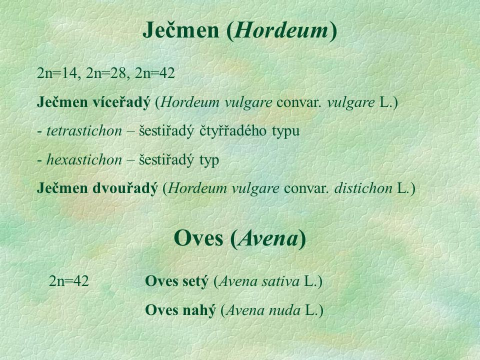 Ječmen (Hordeum) 2n=14, 2n=28, 2n=42 Ječmen víceřadý (Hordeum vulgare convar. vulgare L.) - tetrastichon – šestiřadý čtyřřadého typu - hexastichon – š