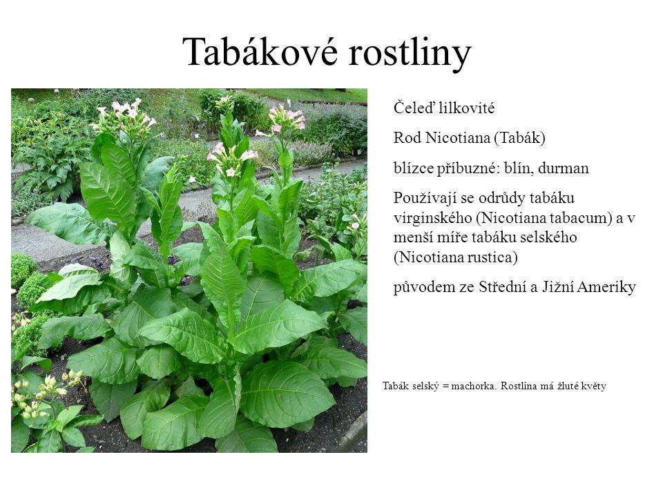 Tabákové rostliny Čeleď lilkovité Rod Nicotiana (Tabák) blízce příbuzné: blín, durman Používají se odrůdy tabáku virginského (Nicotiana tabacum) a v m