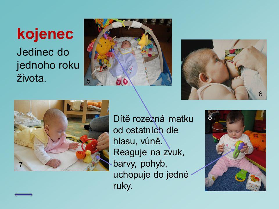 kojenec Jedinec do jednoho roku života. Dítě rozezná matku od ostatních dle hlasu, vůně. Reaguje na zvuk, barvy, pohyb, uchopuje do jedné ruky. 5 7 8
