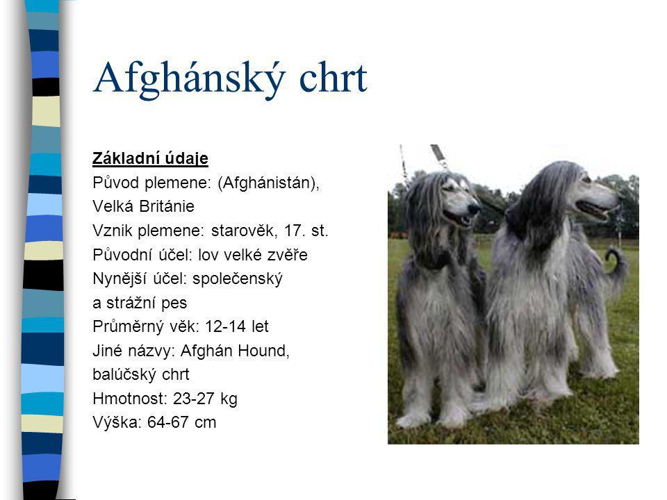 Afghánský chrt Základní údaje Původ plemene: (Afghánistán), Velká Británie Vznik plemene: starověk, 17. st. Původní účel: lov velké zvěře Nynější účel