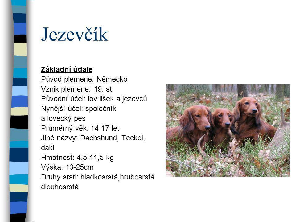 Bernský salašnický pes Základní údaje Původ plemene: Švýcarsko Vznik plemene: starověk, 20.