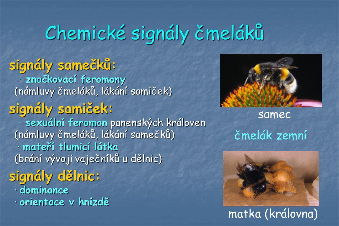 Chemické signály čmeláků signály samečků: · značkovací feromony (námluvy čmeláků, lákání samiček) signály samiček: · sexuální feromon panenských králo