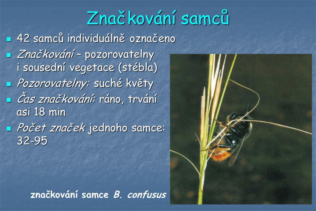 Značkování samců 42 samců individuálně označeno 42 samců individuálně označeno Značkování – pozorovatelny i sousední vegetace (stébla) Značkování – po