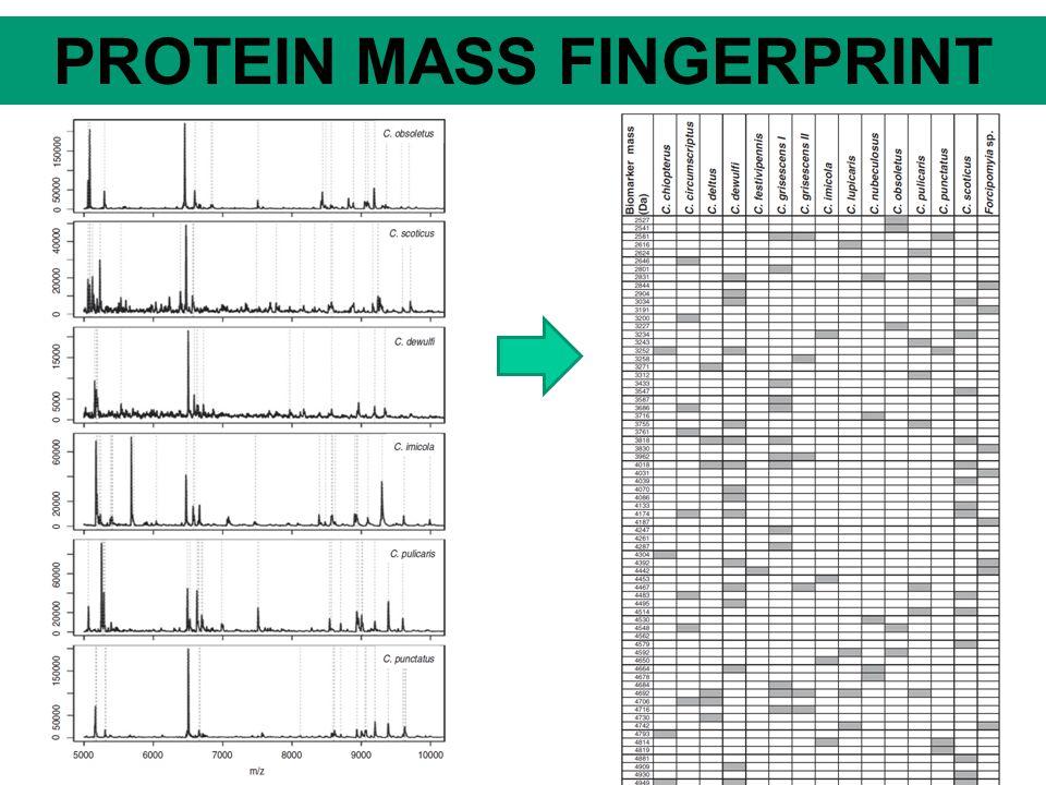 DNA/RNA MASS FINGERPRINT
