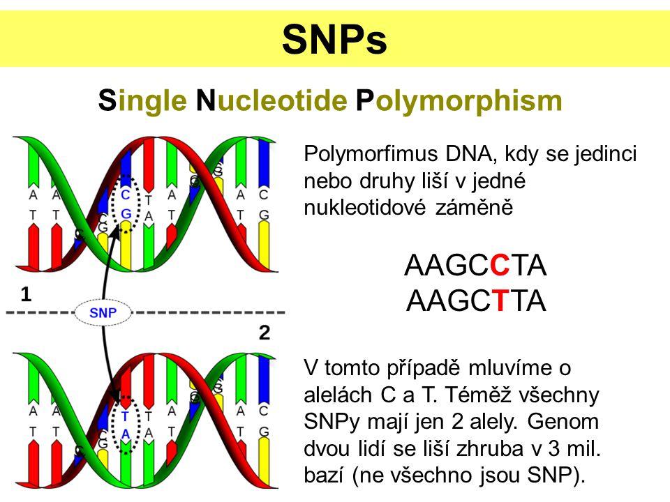 SNPs Single Nucleotide Polymorphism Polymorfimus DNA, kdy se jedinci nebo druhy liší v jedné nukleotidové záměně AAGCCTA AAGCTTA V tomto případě mluvíme o alelách C a T.