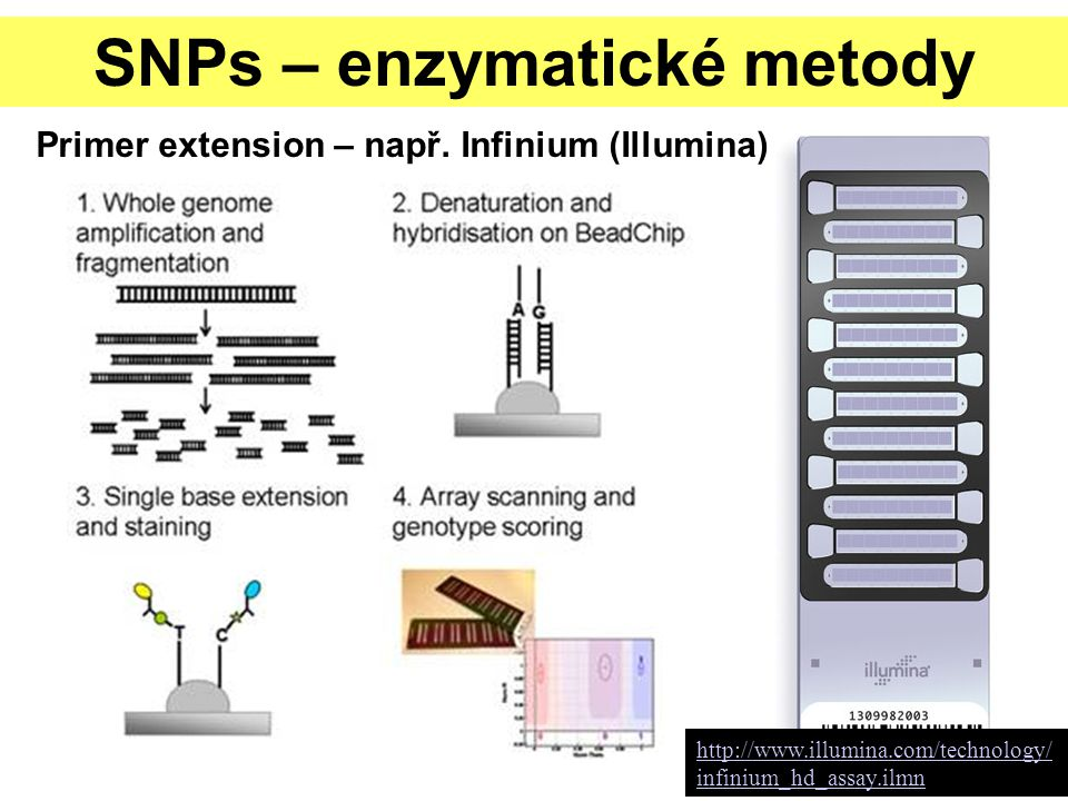 SNPs – enzymatické metody Primer extension – např. Infinium (Illumina) http://www.illumina.com/technology/ infinium_hd_assay.ilmn