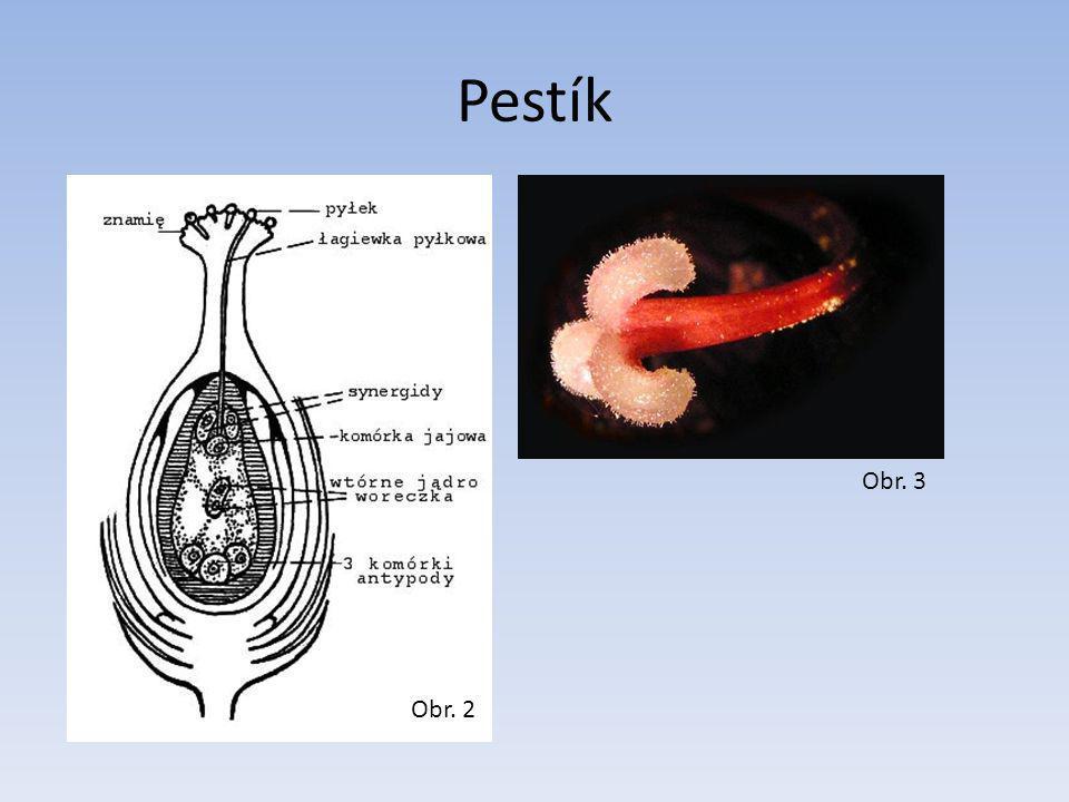 Pestík Obr. 3 Obr. 2