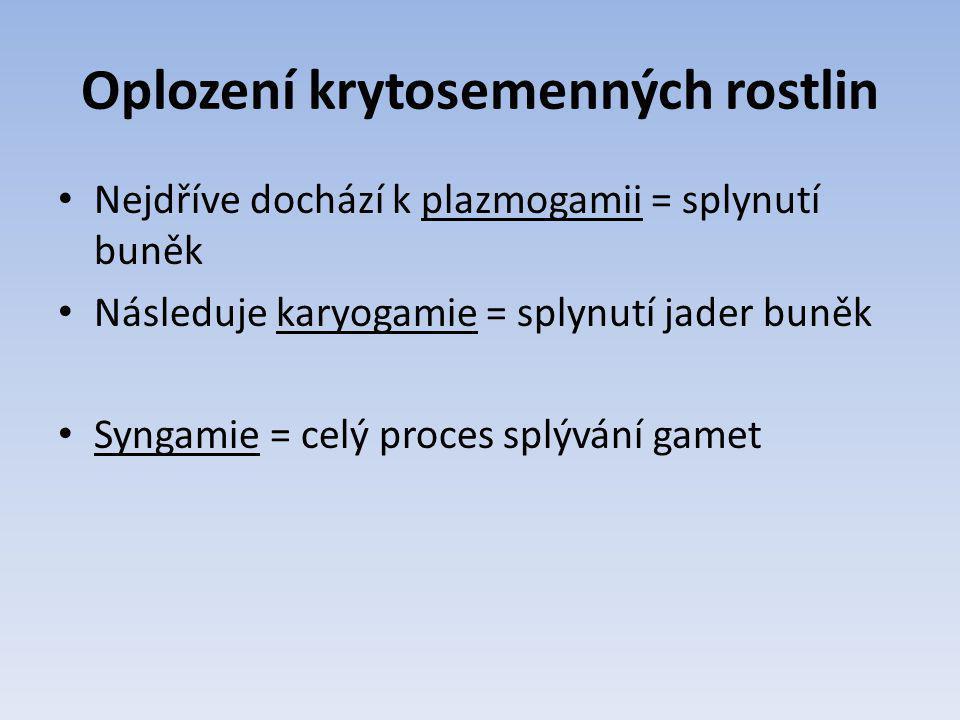 Oplození krytosemenných rostlin Nejdříve dochází k plazmogamii = splynutí buněk Následuje karyogamie = splynutí jader buněk Syngamie = celý proces splývání gamet