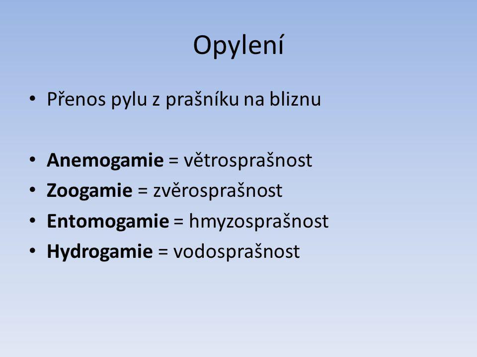 Opylení Přenos pylu z prašníku na bliznu Anemogamie = větrosprašnost Zoogamie = zvěrosprašnost Entomogamie = hmyzosprašnost Hydrogamie = vodosprašnost
