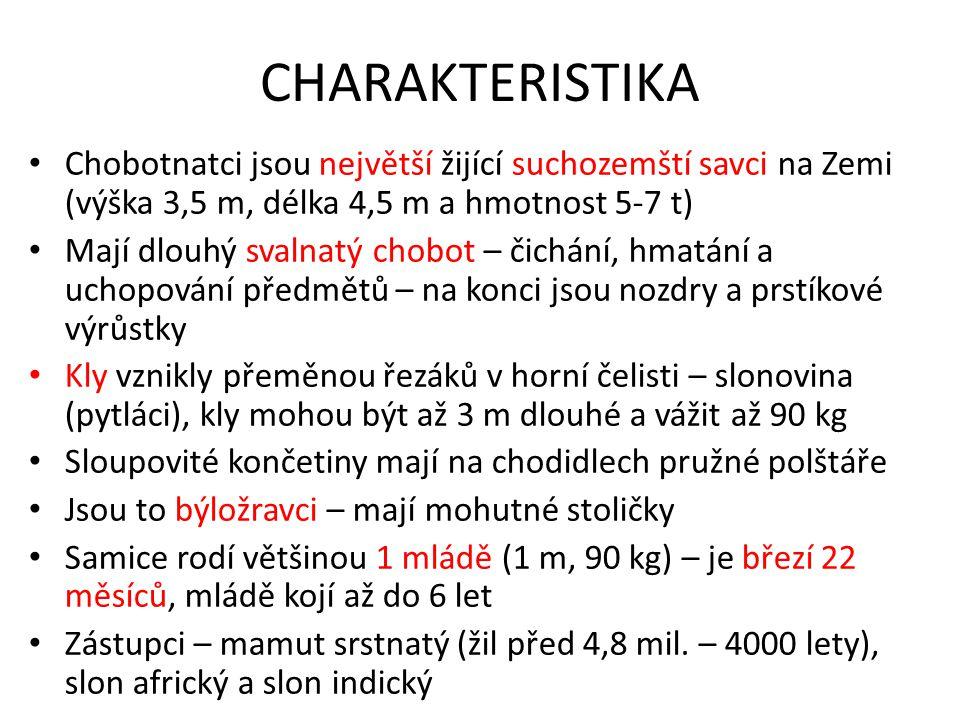 CHARAKTERISTIKA Chobotnatci jsou největší žijící suchozemští savci na Zemi (výška 3,5 m, délka 4,5 m a hmotnost 5-7 t) Mají dlouhý svalnatý chobot – č