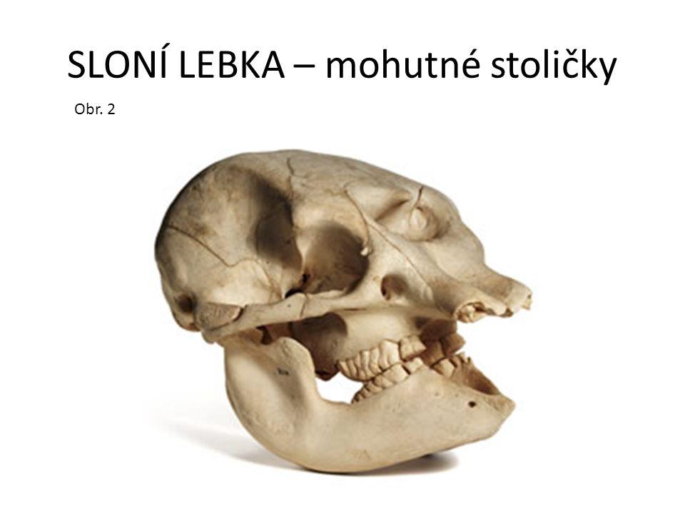 ZÁSTUPCI (referáty na vybrané savce) Mamut – dlouhá srst, doba ledová, vyhynul před Slon africký – větší, velké ušní boltce (ochlazování těla) a kly, 2 prstíky na chobotu Slon indický – menší, menší ušní boltce a kly, 1 prstík na chobotu