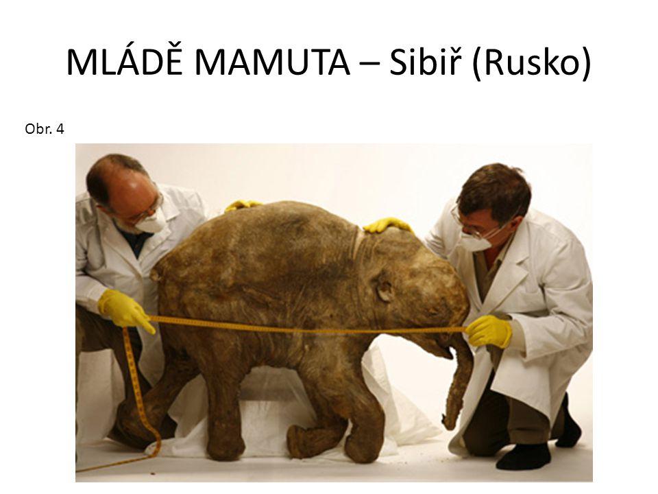 MLÁDĚ MAMUTA – Sibiř (Rusko) Obr. 4