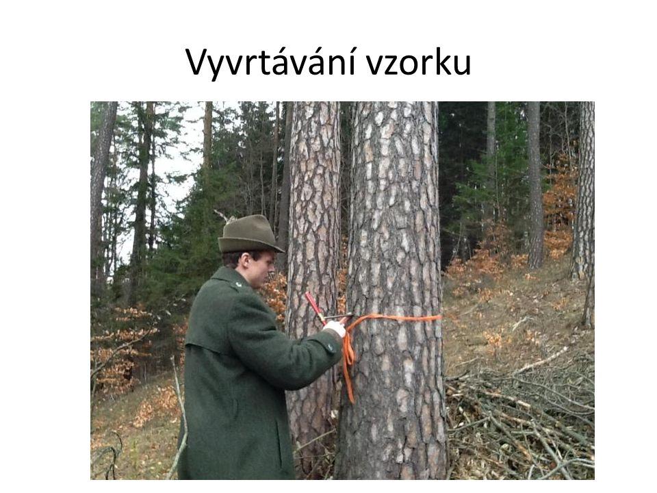 Strom 2 (Borovice lesní-Pinus sylvestris) Lokalita: D4/14 Expozice svahu: J Sklon svahu: 19° Popis lokality: Mírný svah Výška odběru: 130cm Odhadovaná tloušťka: 50cm Změřená tloušťka: 45cm Odhadovaný obvod: 140cm Změřený obvod: 142cm Odhadovaná výška: 24m Odstupová vzdálenost: 20m Úhel paty stromu: 9° Úhel na vrchol: 48° Tg úhlu od paty: 0,16 Tg úhlu od vrcholu: 1,11 Vypočtená výška: 25,4m Změřená výška: 25m Délka vzorku: J=13, S=13cm Počet letokruhů 10 cm: J-79/S-70 Vypočtený průměr na 1 cm 7,4 ks Vypočtený poloměr: 19,5cm Počet letokruhů na poloměr 144 ks / věk 153 let