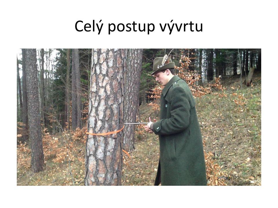 Měření tloušťky lesnickou průměrkou