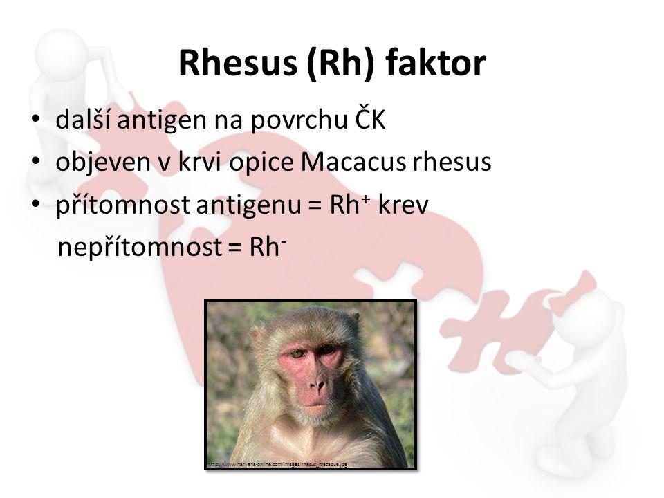 Rhesus (Rh) faktor další antigen na povrchu ČK objeven v krvi opice Macacus rhesus přítomnost antigenu = Rh + krev nepřítomnost = Rh - http://www.hary
