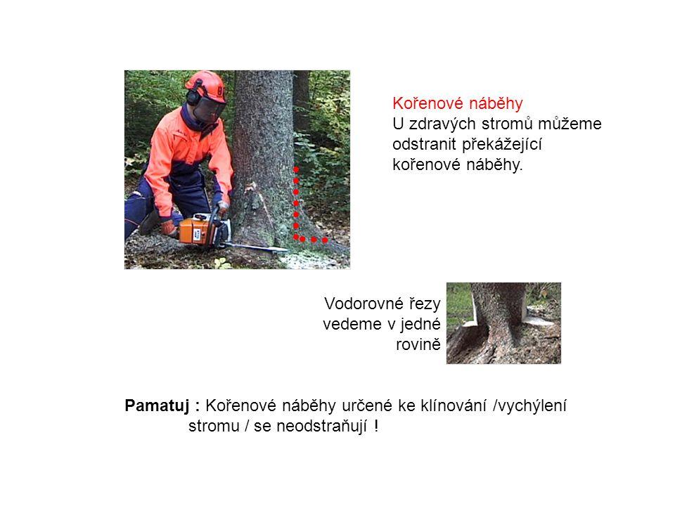 Pamatuj : Kořenové náběhy určené ke klínování /vychýlení stromu / se neodstraňují .