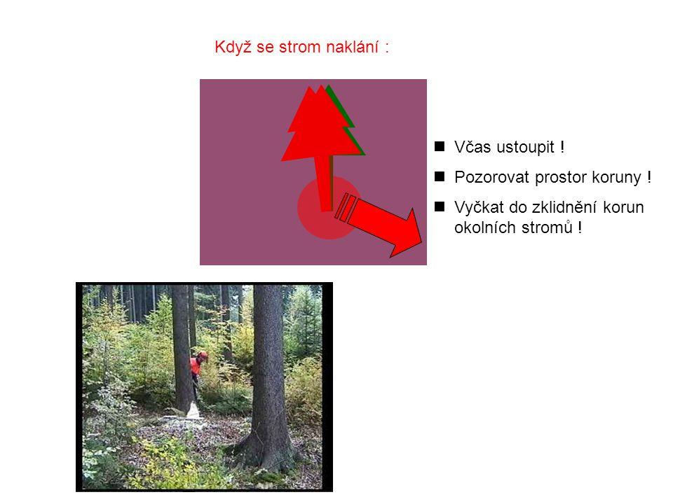 nVčas ustoupit .nPozorovat prostor koruny . nVyčkat do zklidnění korun okolních stromů .