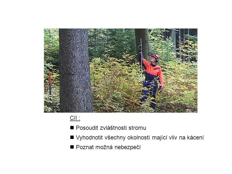 Cíl : n Posoudit zvláštnosti stromu n Vyhodnotit všechny okolnosti mající vliv na kácení n Poznat možná nebezpečí